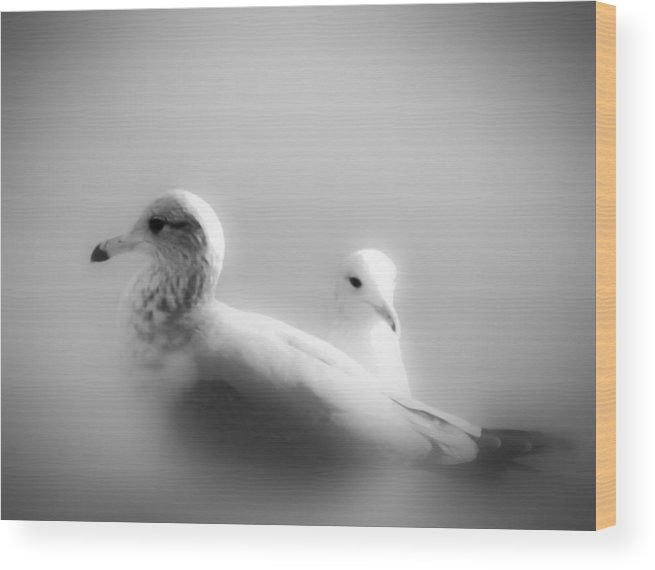 Gulls Wood Print featuring the photograph Gulls In The Mist by KaFra Art