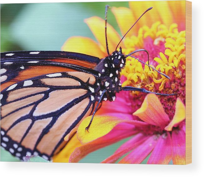 Butterfly Wood Print featuring the photograph Happiness by Mitch Cat