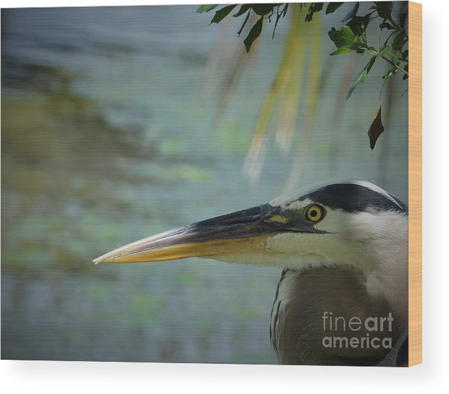 Heron Wood Print featuring the photograph Just Hanging Our by Pamela Blizzard
