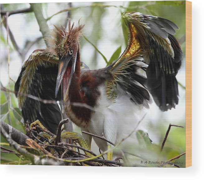 Tri-colored Heron Wood Print featuring the photograph Learning To Fly by Barbara Bowen
