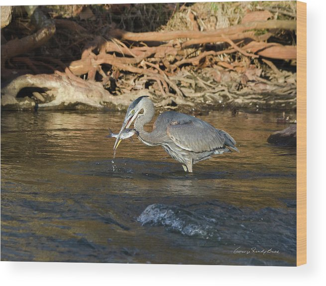 Heron Wood Print featuring the photograph Lunch On The Neuse River by George Randy Bass