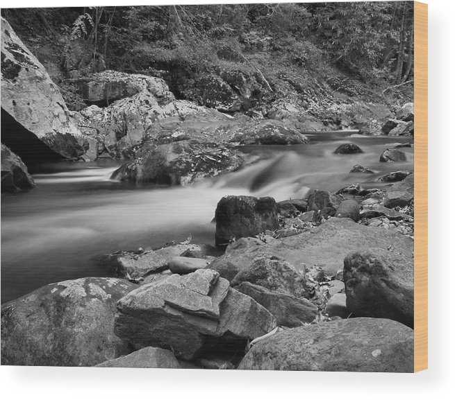 Natural Contrast Black And White Wood Print featuring the photograph Natural Contrast Black And White by Dan Sproul