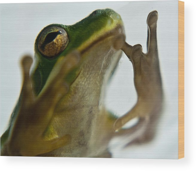 Frog Wood Print featuring the photograph Please Not In A Frogs Eye by Douglas Barnett