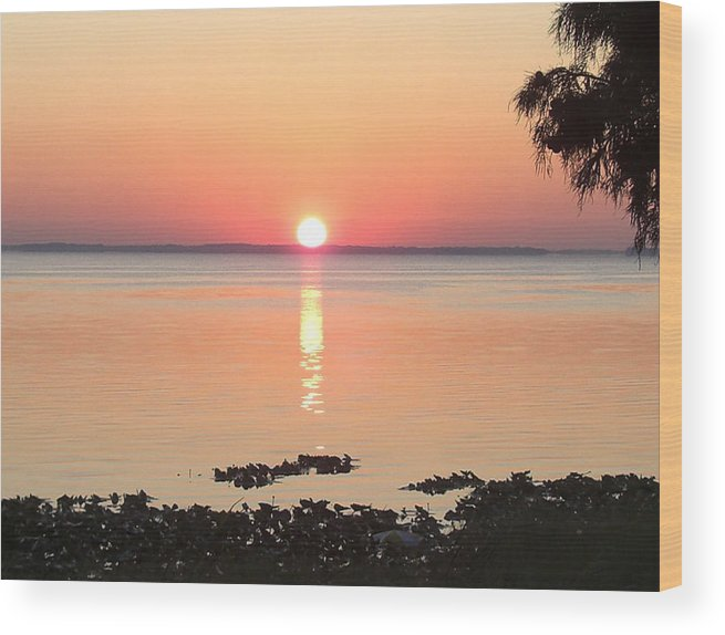 Sunrise-sunset Photographs Wood Print featuring the photograph Rising Sun by Frederic Kohli
