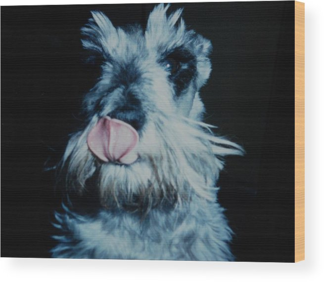 Dogs Wood Print featuring the photograph Sam The Fat Cow by Rob Hans