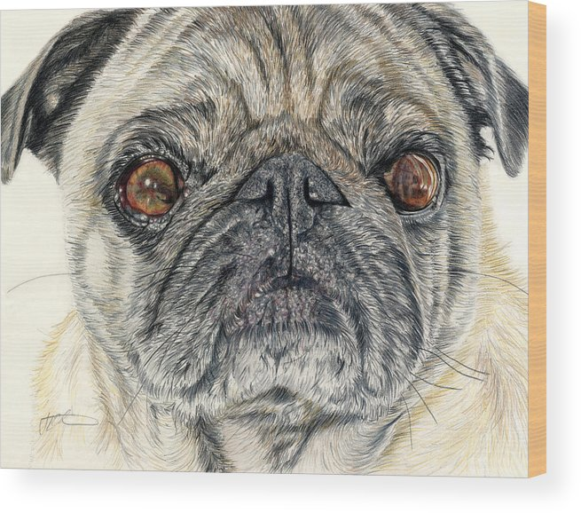 Dogs Wood Print featuring the drawing Stanley by Joanne Stevens
