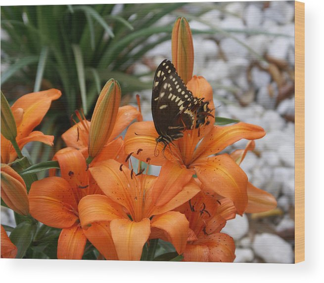 Easter Lilly Wood Print featuring the painting The Descent by Debbie May