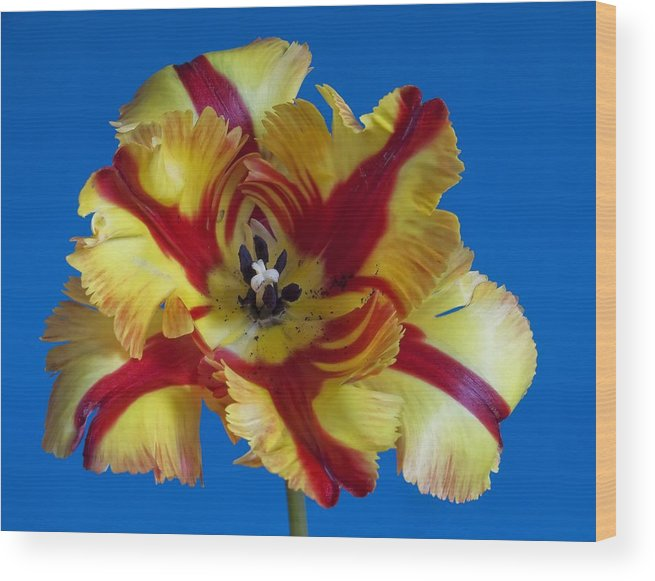 Flowers Wood Print featuring the photograph Tiger Lily 2 by Robert Ullmann