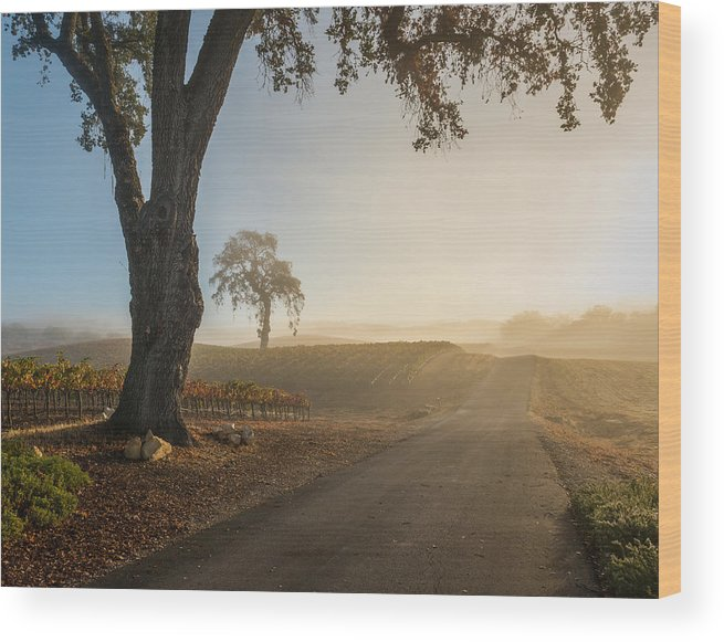 Paso Robles Wood Print featuring the photograph Vineyard Road by Joseph Smith