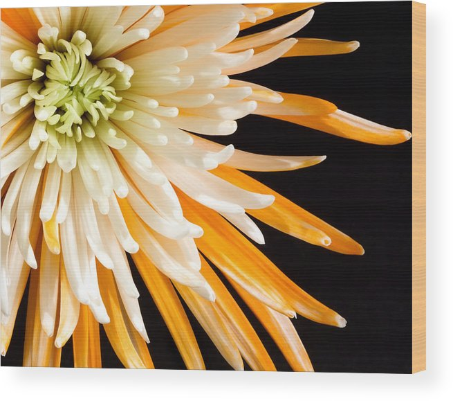 Flower Wood Print featuring the photograph Yellow Flower On Black by Al Mueller