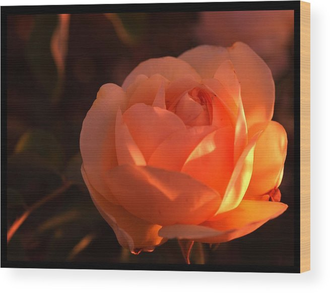 Flowers Wood Print featuring the photograph Warm Sun by Richard Gordon