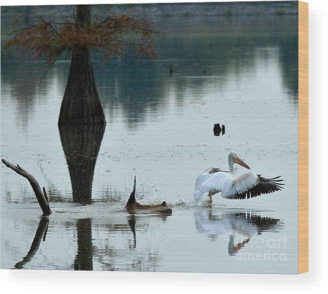 Pelican Wood Print featuring the photograph White Pelican by Kevin Pugh