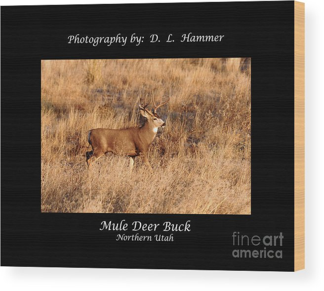 Wildlife Wood Print featuring the photograph Mule Deer Buck by Dennis Hammer