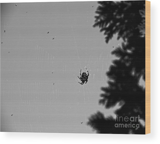 Animals Wood Print featuring the photograph A Busy Spider by Gerlinde Keating - Galleria GK Keating Associates Inc