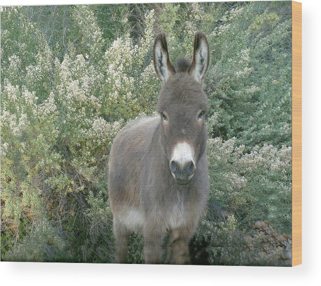 Animals Wood Print featuring the photograph Benny by Dody Rogers