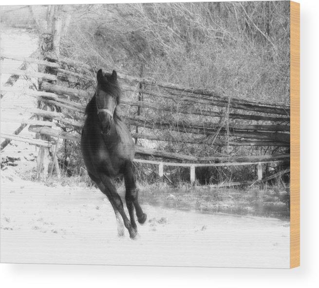 Animal Wood Print featuring the photograph Black Diamond Jubilee 2 by Davandra Cribbie