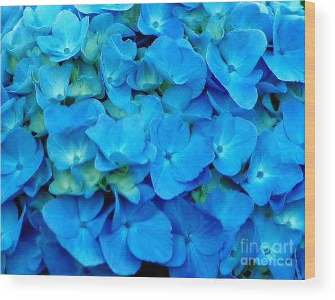 Blue Wood Print featuring the photograph Blue Hydrangea by Kathleen Struckle