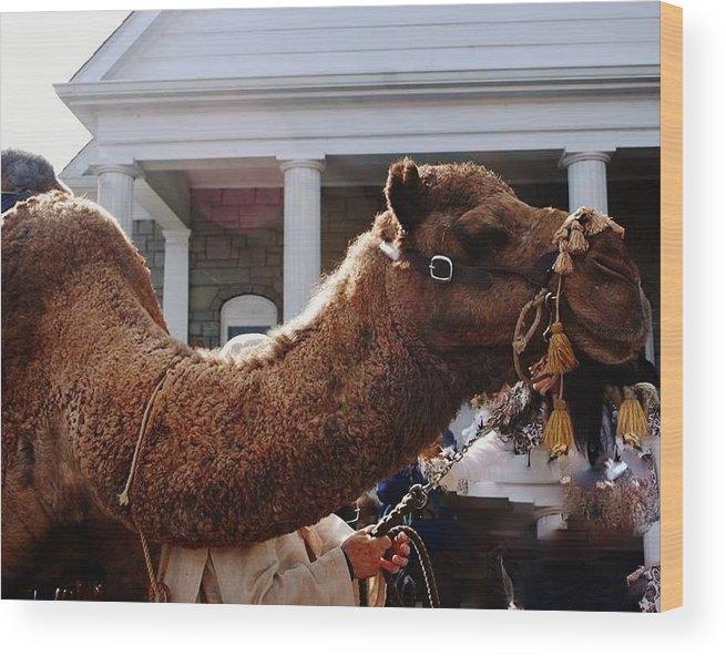 Christmas Wood Print featuring the painting Camel Portrait by Mimi Saint DAgneaux