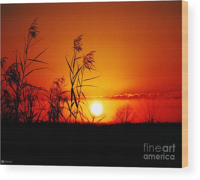 Louisiana Wood Print featuring the photograph Creole Trail Sunset by Lizi Beard-Ward