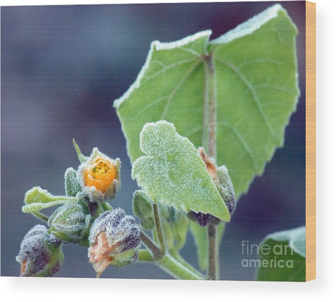 Frost Wood Print featuring the photograph Early Morning Frost by Optical Playground By MP Ray