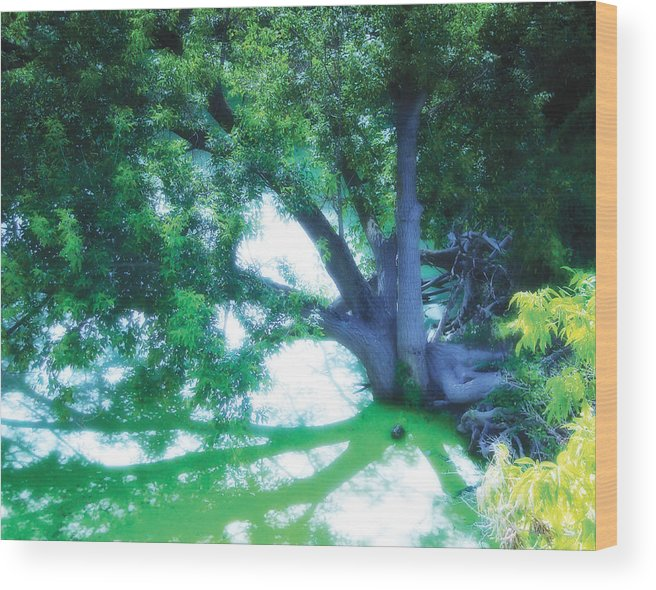 weeping Willow Wood Print featuring the photograph Enchanted Forest 15 by The Art of Marsha Charlebois
