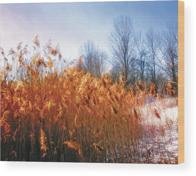 Cattails Wood Print featuring the photograph Enchanted Forest 2 by The Art of Marsha Charlebois