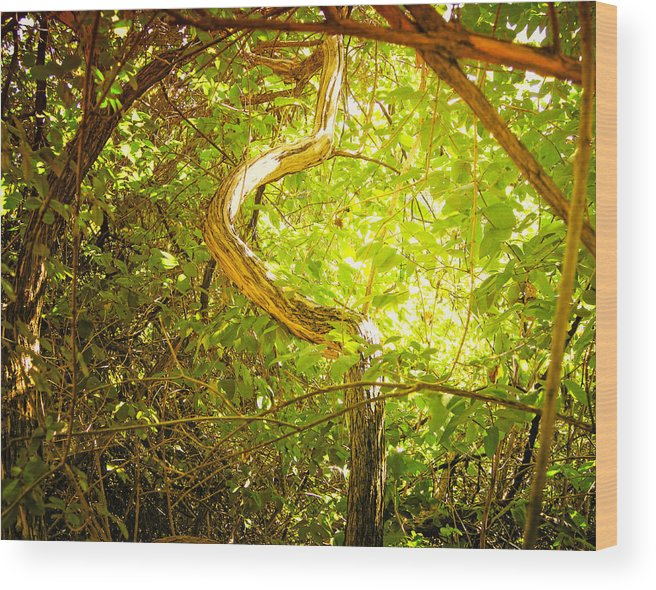 merritt Island Park Wood Print featuring the photograph Enchanted Forest 4 by The Art of Marsha Charlebois