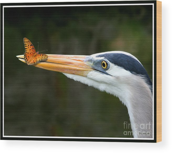 Fauna Wood Print featuring the photograph Heron And Butterfly by Mariarosa Rockefeller