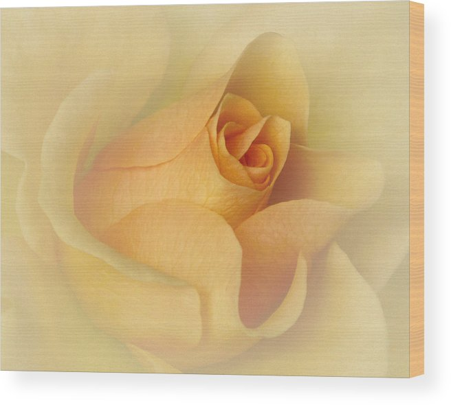 Bloom Wood Print featuring the photograph Just Peachy by David and Carol Kelly