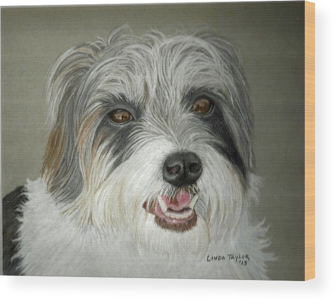Long Hair Jack Russell Terrier Portrait Wood Print By Linda Taylor