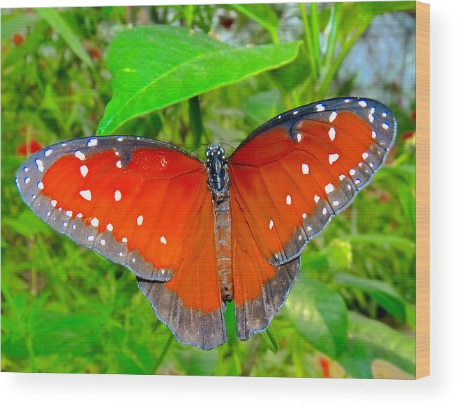 Butterflys Wood Print featuring the photograph Queen Of The Garden by Susan Duda