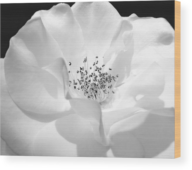 Rose Wood Print featuring the photograph Soft Petal Rose In Black And White by Jennie Marie Schell