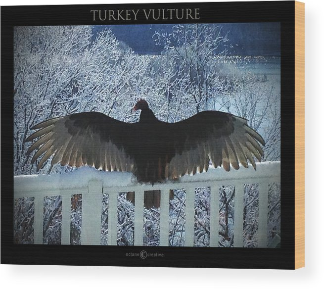 Sunning Wood Print featuring the photograph Turkey Vulture Sunning by Tim Nyberg