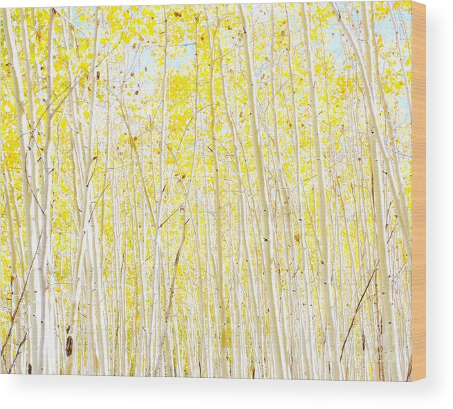 Yellow Wood Print featuring the photograph Vanilla Cake by Ruth Jolly