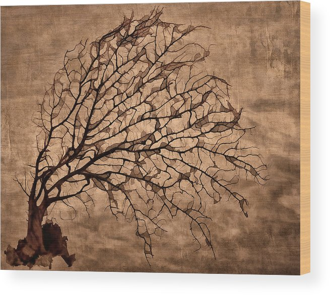 Tree Wood Print featuring the photograph Windowpane Coral by Carol Leigh
