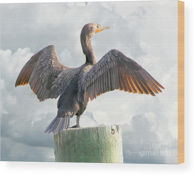 Cormorant Wood Print featuring the photograph Winging It by Mariarosa Rockefeller
