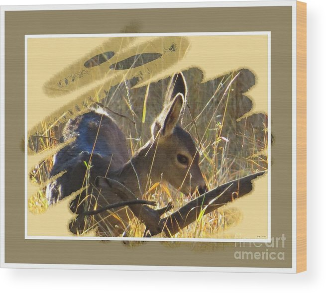 Black-tail Deer Wood Print featuring the photograph Yosemite Np Wildlife - Doe by Scott Cameron