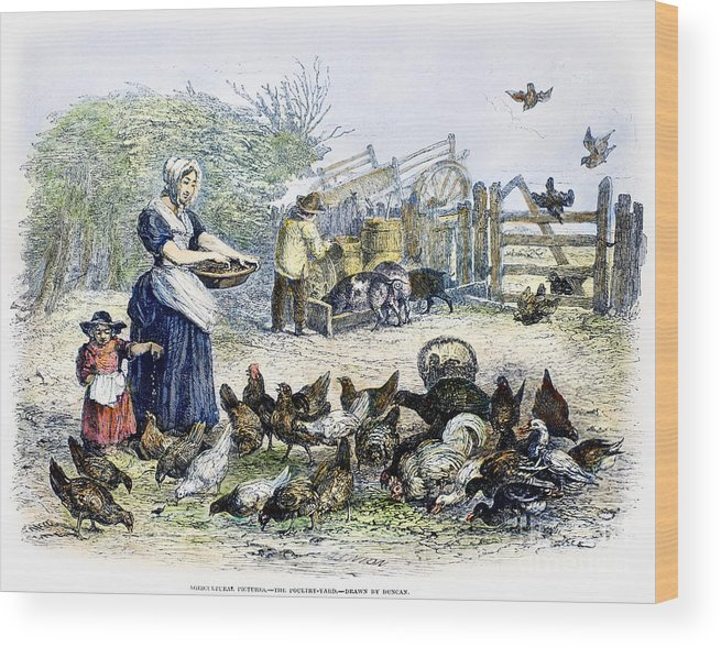 1847 Wood Print featuring the photograph Poultry Yard, 1847 by Granger