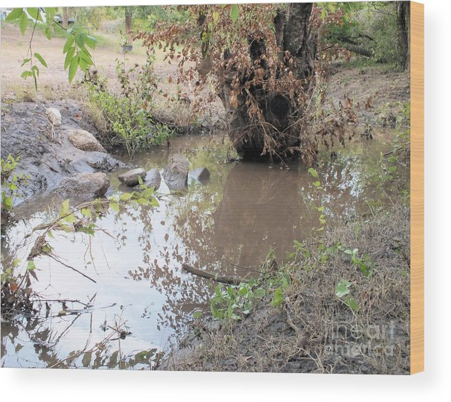 Outdoors Wood Print featuring the photograph Creek Bed 1 by Tammy Herrin
