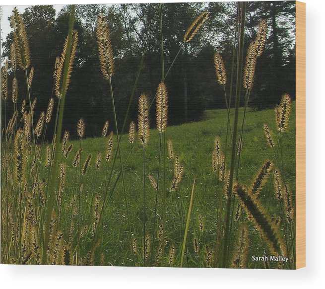 Country Field Wood Print featuring the photograph Fall Grasses by Sarah Malley