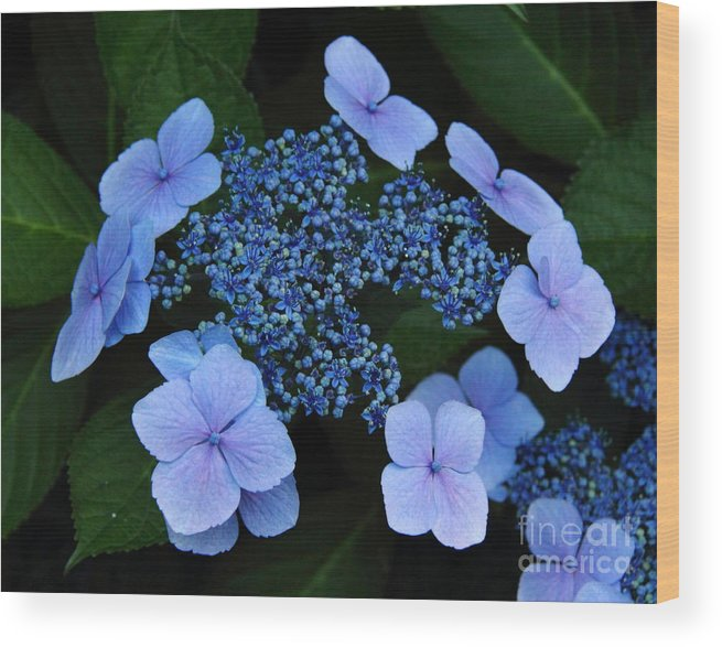 Nature Wood Print featuring the photograph Please Be Mine by Tracy Pickett
