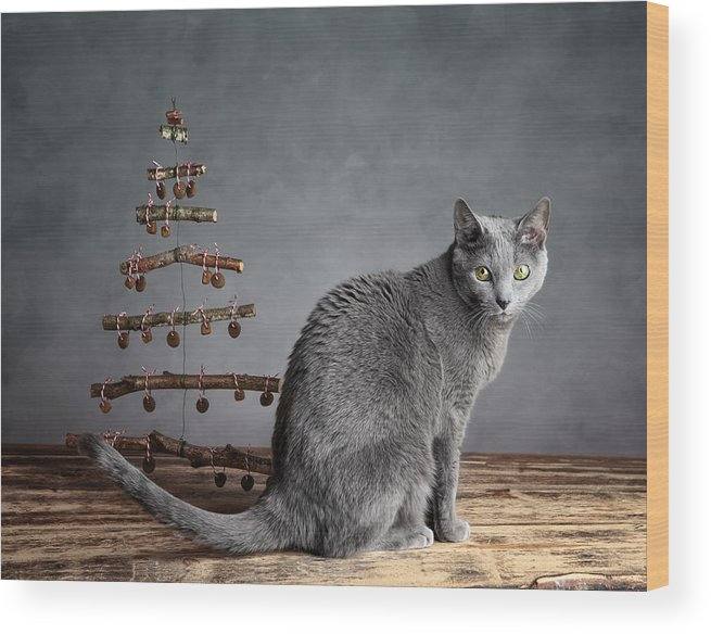 Cat Wood Print featuring the photograph Cat Christmas by Nailia Schwarz