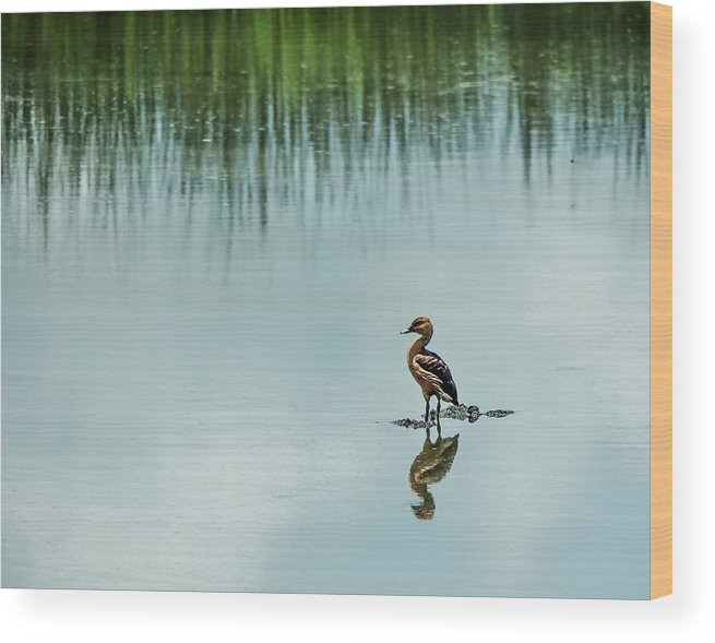 Duck Wood Print featuring the photograph Peaceful Morning by Jerry Connally