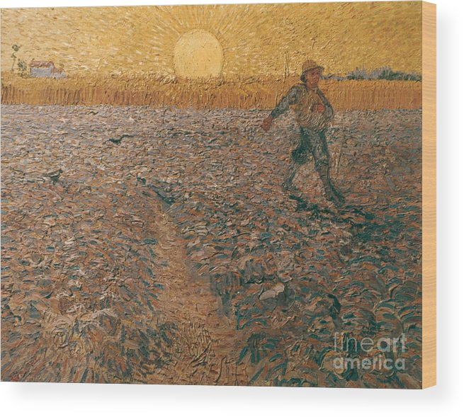 1888 Wood Print featuring the photograph Van Gogh: Sower, 1888 by Granger