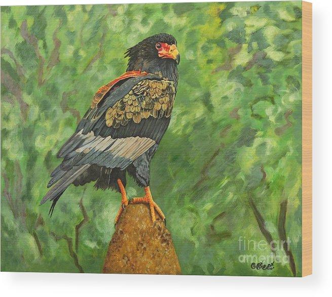 Eagle Wood Print featuring the painting Bataleur Eagle by Caroline Street