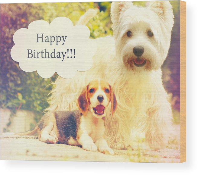 Beagle Puppy Westy Birthday Card Wood Print By Sandra Rugina