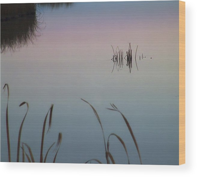 Water Wood Print featuring the photograph Bear River Marshes by David Sidwell