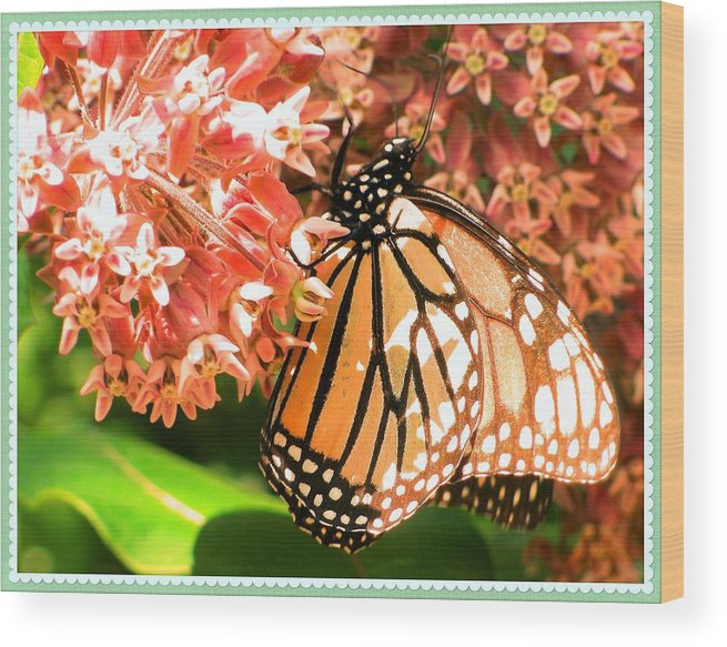 Butterfly Wood Print featuring the photograph Butterfly by Jennie Perry