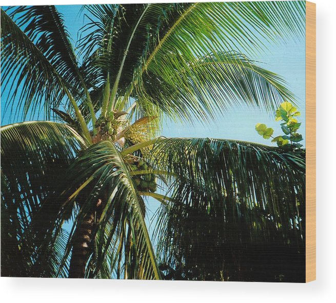 Jamaica Wood Print featuring the photograph Coconut Tree by Debbie Levene