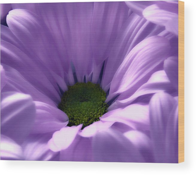 Flower Wood Print featuring the photograph Flower Macro Beauty 4 by Johanna Hurmerinta